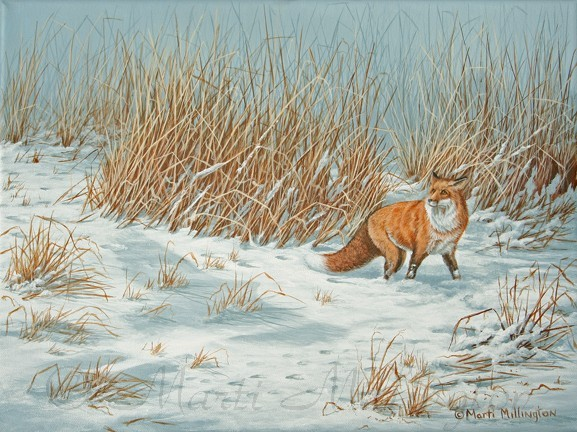 Hunting - Red Fox