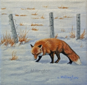 Hunting the Fence Row - Fox 6x6 Acrylic $300