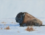 Monarch - Bison