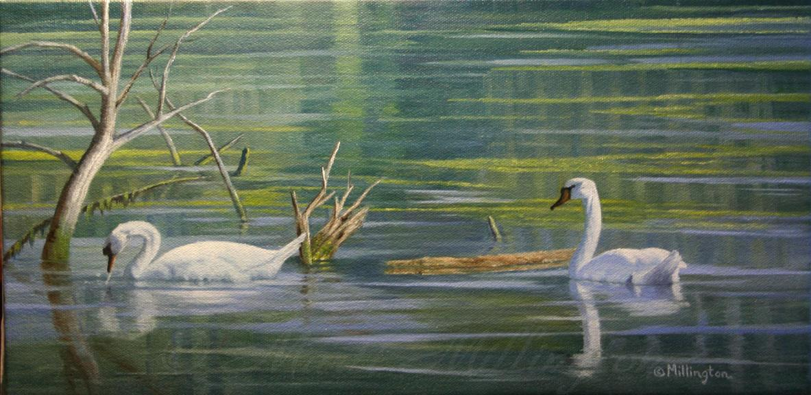 Reflections - Swans