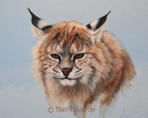 WIP-Bobcat